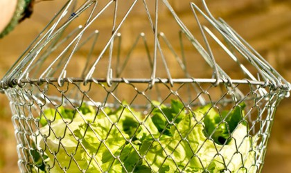Lettuce-in-the-cage_pt