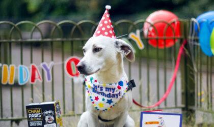 Taz-1st-Birthday-Party_6_vertical_pt
